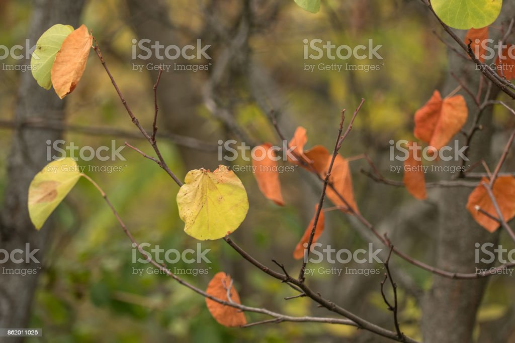 Branch with yellowing leaves stock photo
