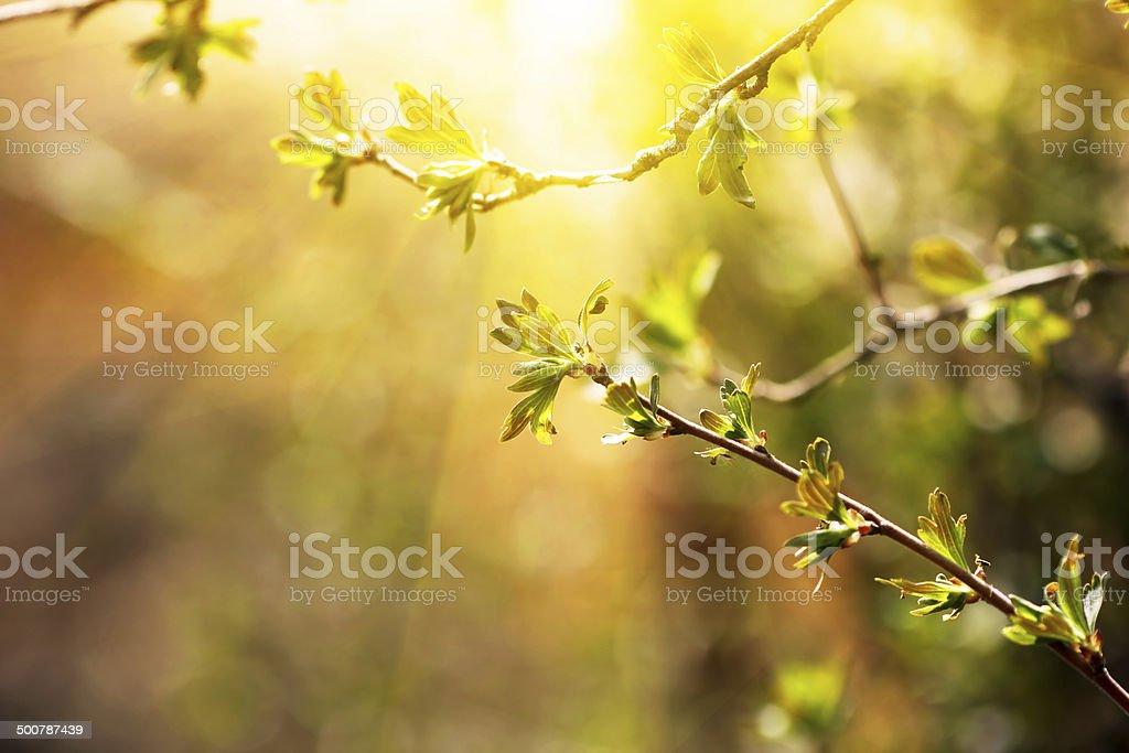 Succursale de jouer. le printemps avec Jeune - Photo