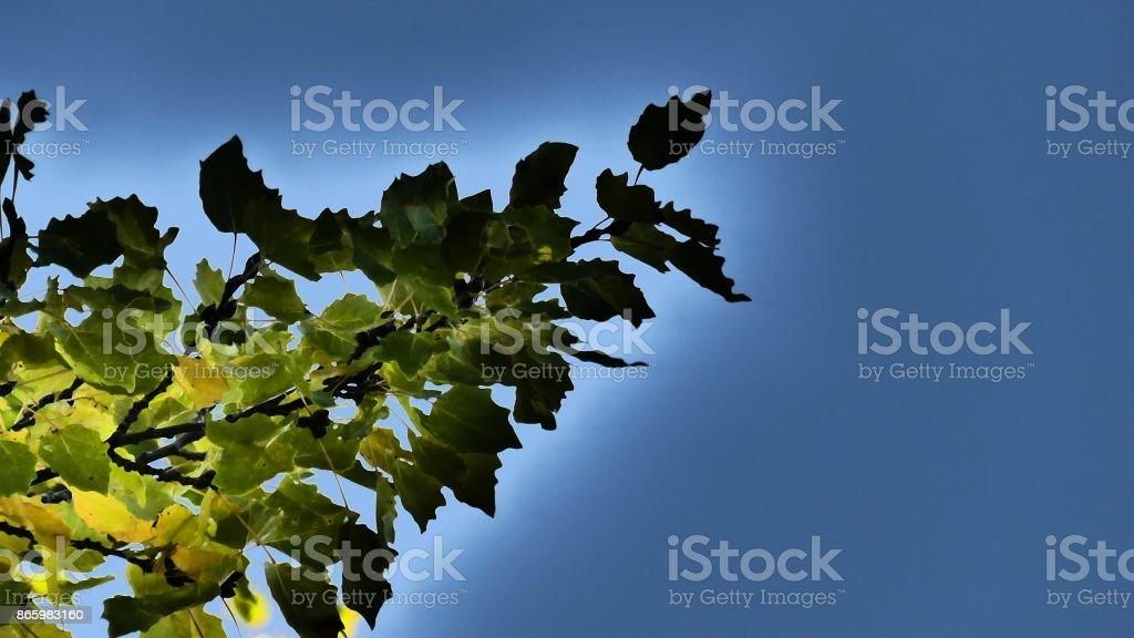 Branche d'arbre tout en nuances stock photo