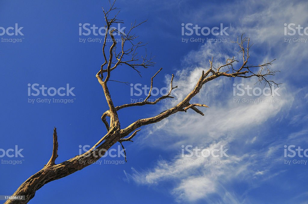 Branches against the sky. royalty-free stock photo