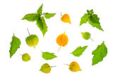 Branches and fruits of physalis on white background. Studio Photo