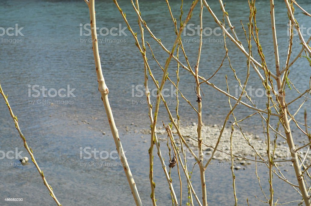 Branches and river stock photo