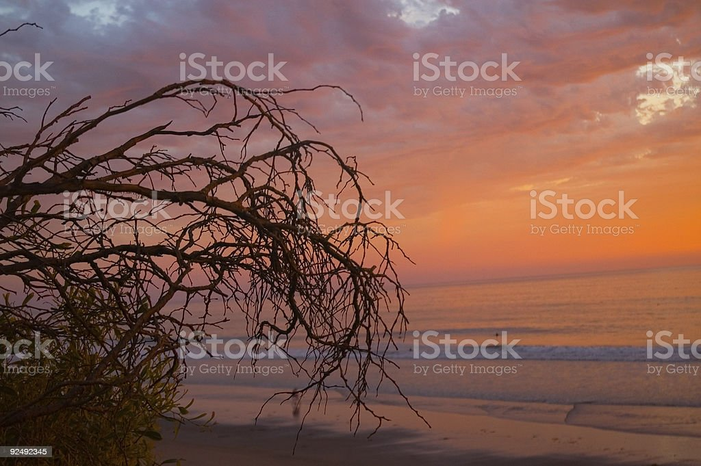 Branches and the Sea royalty-free stock photo