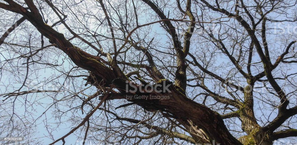 Branches and trunk of an old tree against a blue sky foto de stock royalty-free