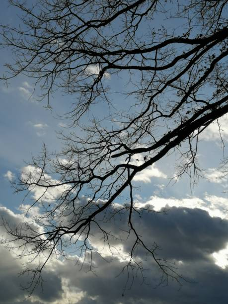 Branches as contrast to cloud-sky stock photo
