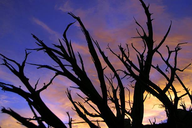 Filialen bei Sonnenuntergang – Foto