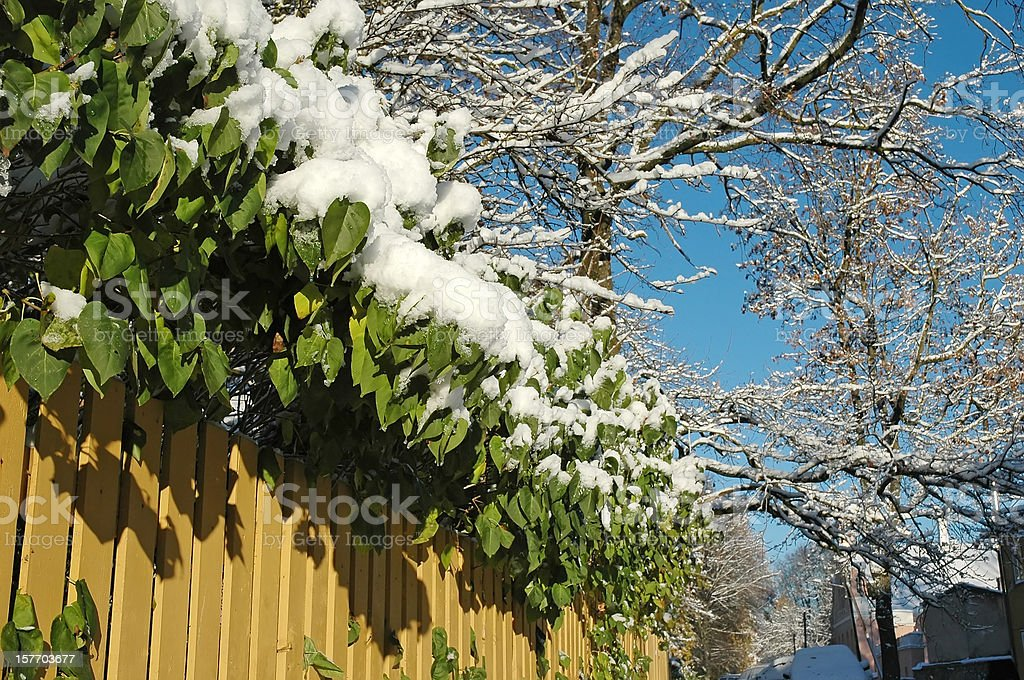 branches at winter royalty-free stock photo