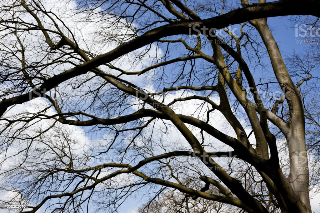 branches caress the sky - foto stock