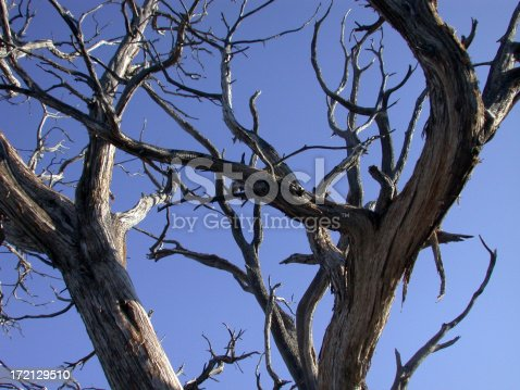 Branches from a withered tree - photo taken at grand canyon.