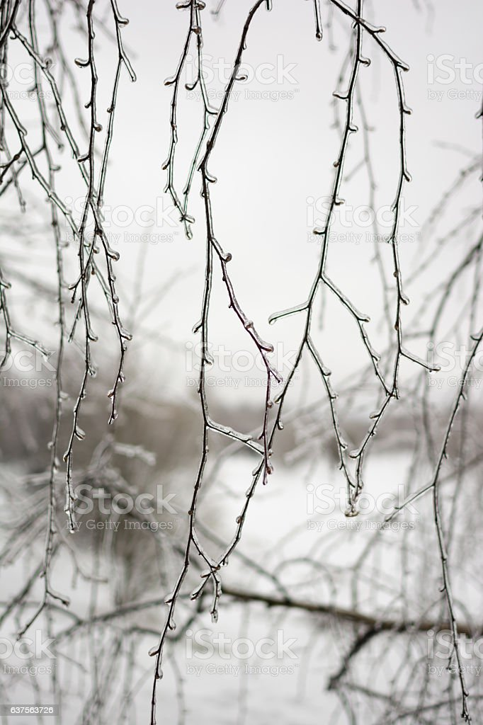 branches in ice on a background of gray sky stock photo