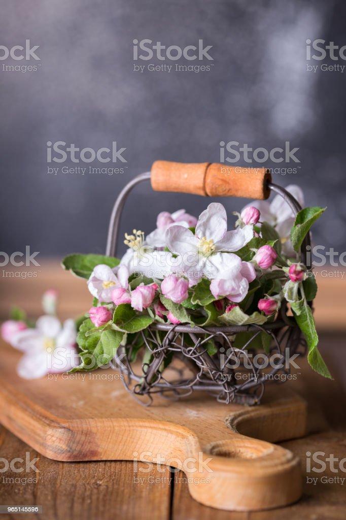 branches of a blossoming apple-tree zbiór zdjęć royalty-free