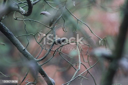 branches of a tree covered with moss in the forest on a blurred background, horizontal