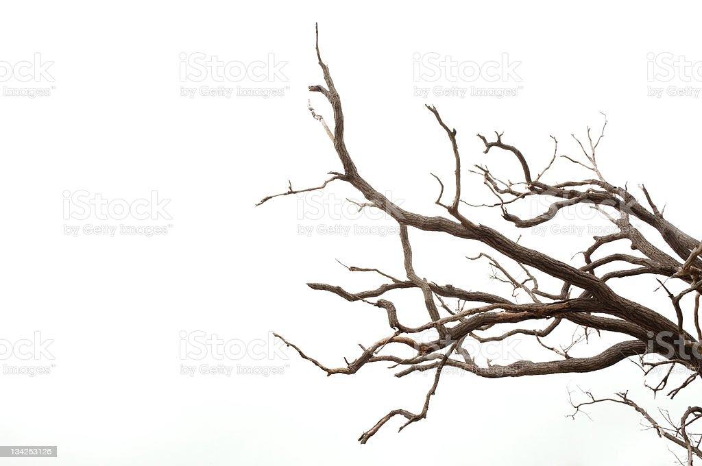 Ramas de árbol - foto de stock