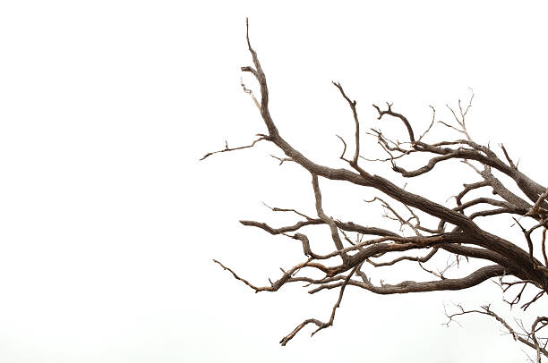 branches of a tree - plantdeel stockfoto's en -beelden