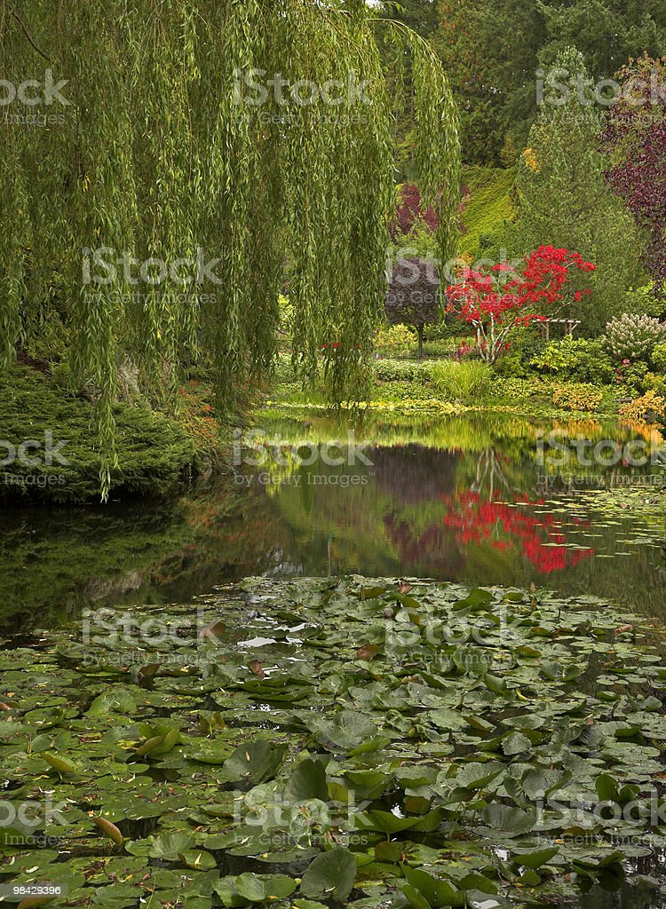 Branches of a willow royalty-free stock photo