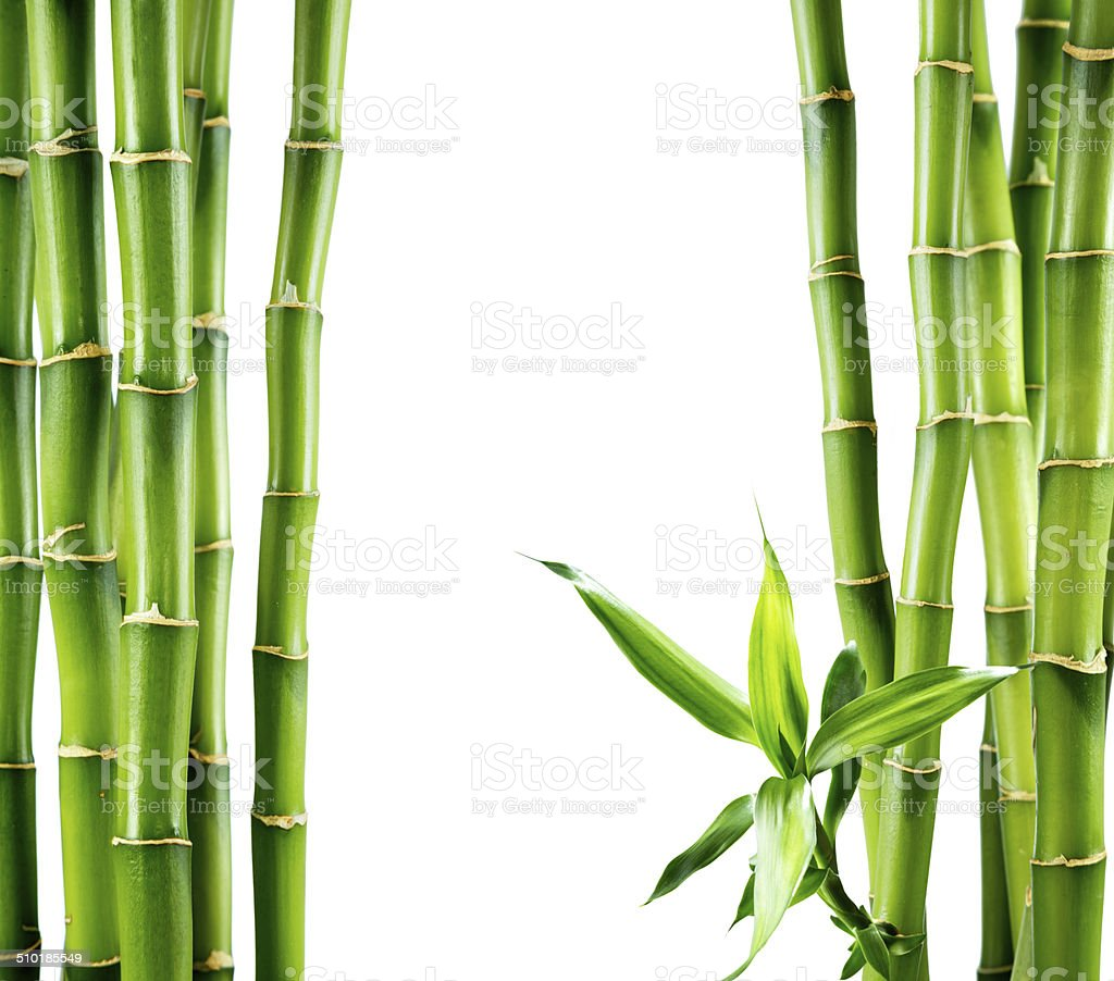 branches of bamboo board stock photo