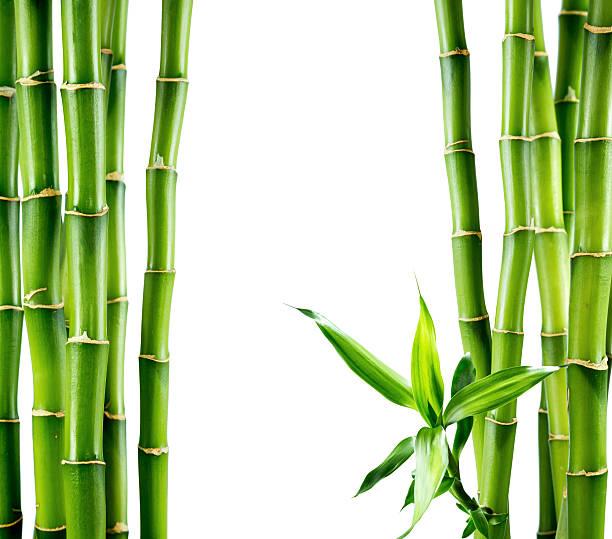 Ramas de bambú de planchar - foto de stock
