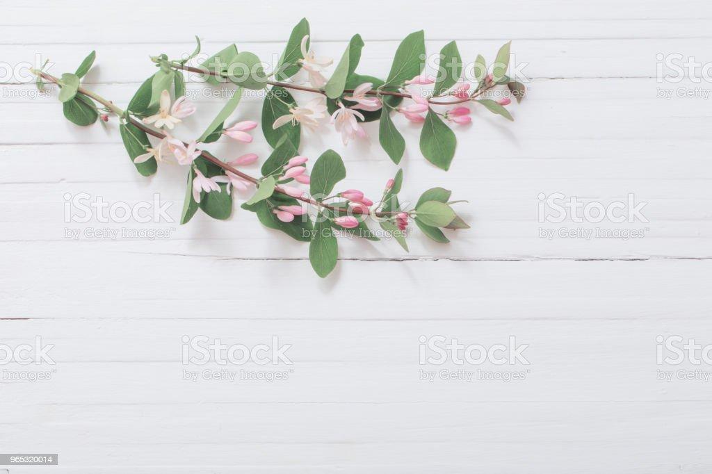 branches de l'arbuste avec des fleurs roses sur fond en bois - Photo de Arbre libre de droits