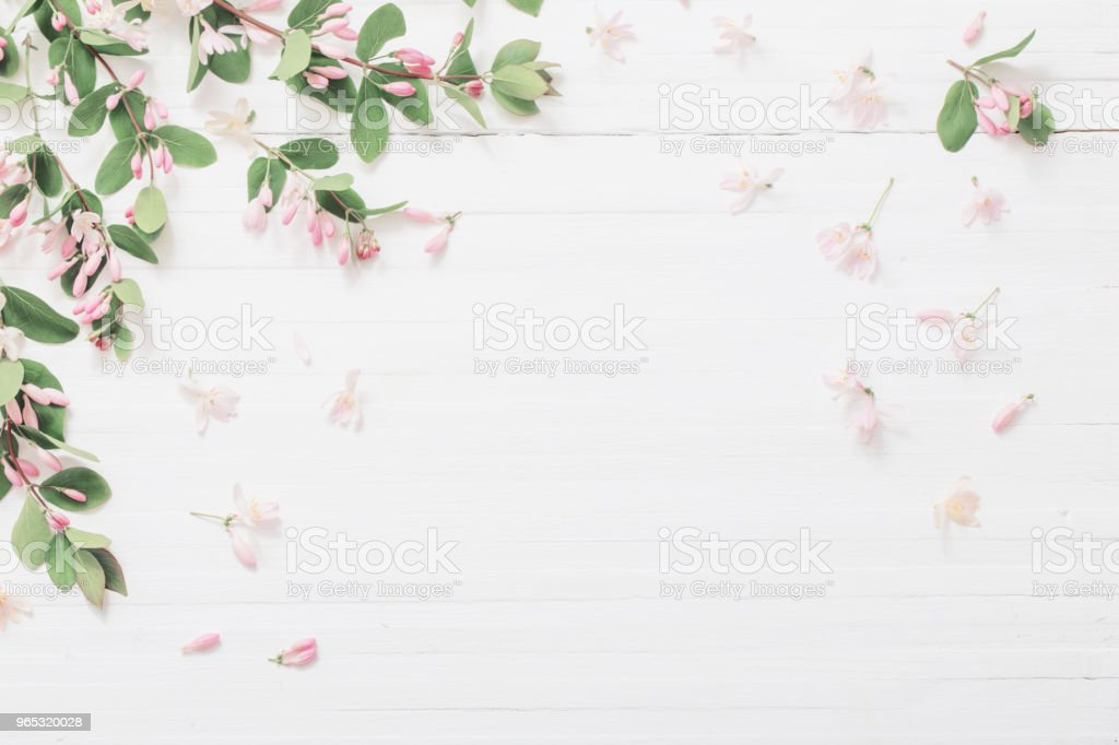 branches of  bush with pink flowers on wooden background royalty-free stock photo