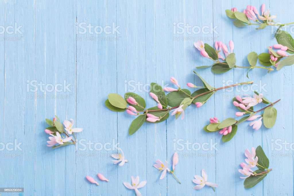 branches of  bush with pink flowers on wooden background zbiór zdjęć royalty-free
