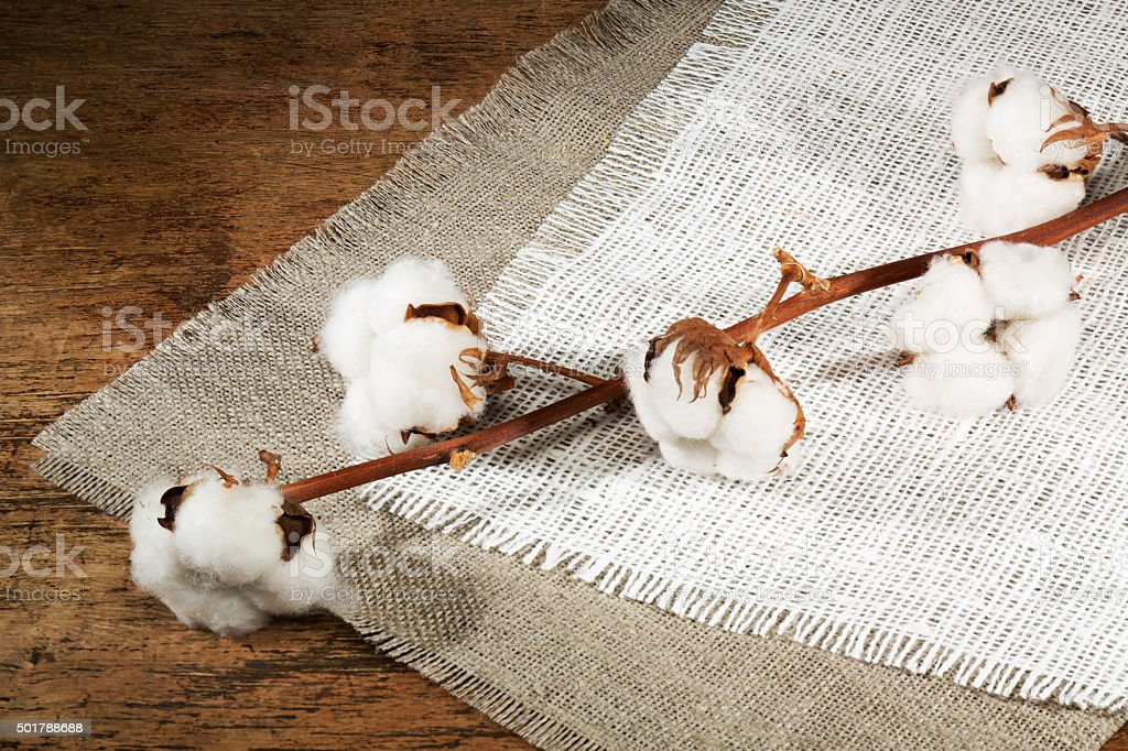 branches of cotton, fiber on a wooden background stock photo
