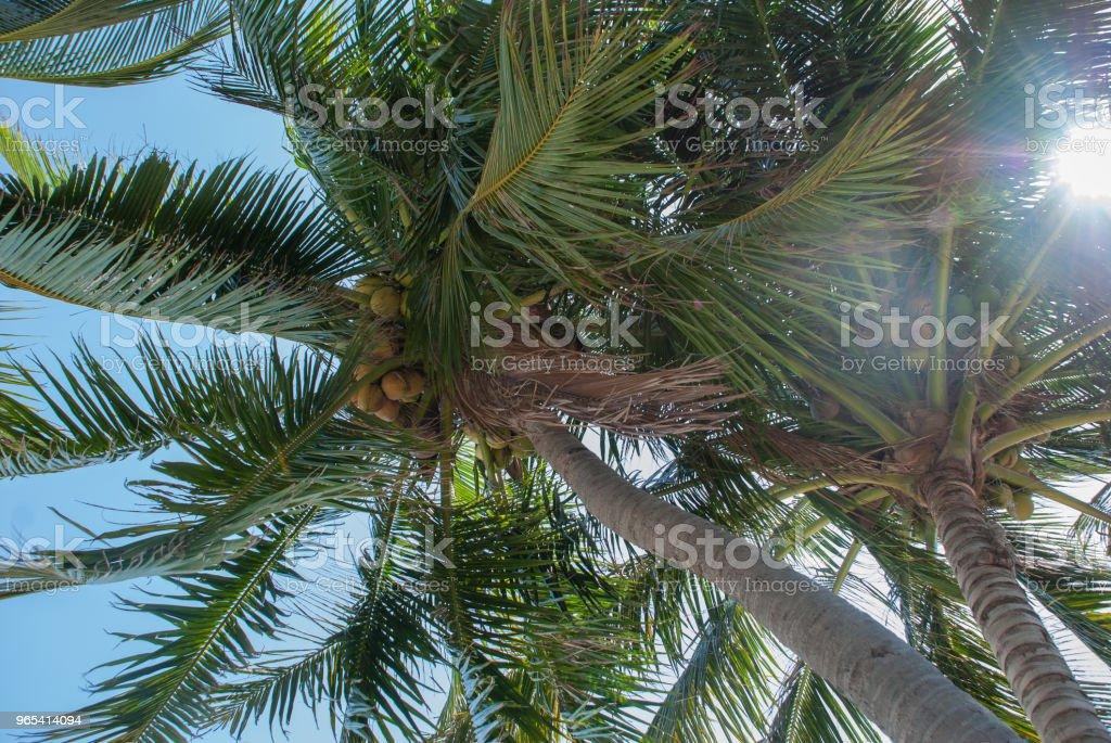 Branches of palm tree and sunlight zbiór zdjęć royalty-free