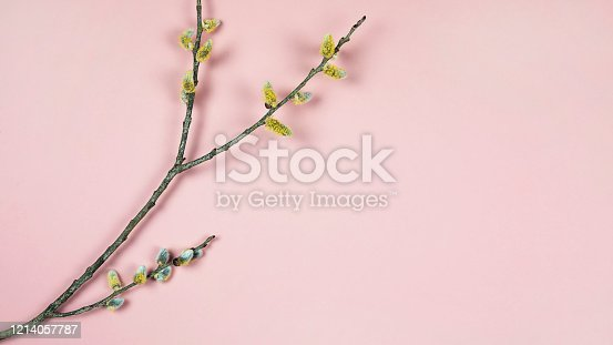 921112244 istock photo Branches of pussy willow on pink background. Spring background with twigs full of buds of based willow catkins, copy space. Easter, spring seasonal arrangement, banner, flat lay. 1214057787