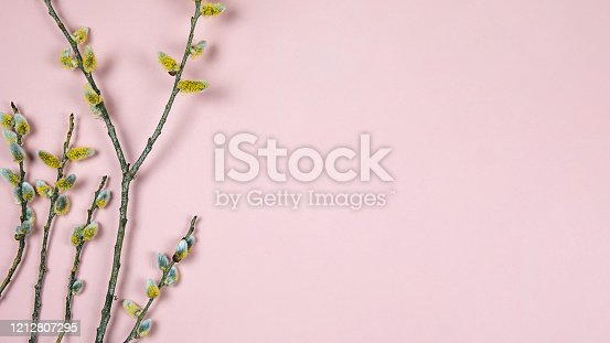 921112244 istock photo Branches of pussy willow on pink background. Spring border background with twigs full of buds of  based willow catkins, copy space. Easter, spring seasonal arrangement, flat lay. 1212807295