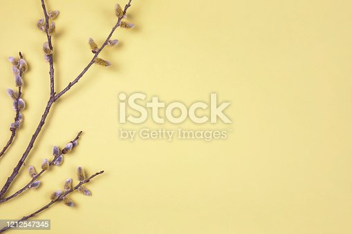 921112244 istock photo Branches of pussy willow on yellow background. Spring border background with buds of  based willow catkins. Easter season flat lay. 1212547345