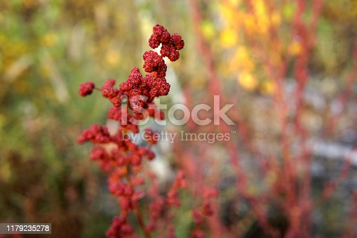 Branches of some unknown plant with red lumps and clots