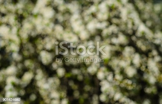 1135260918 istock photo Branches of the blossoming cherry. Blurred background 901424680