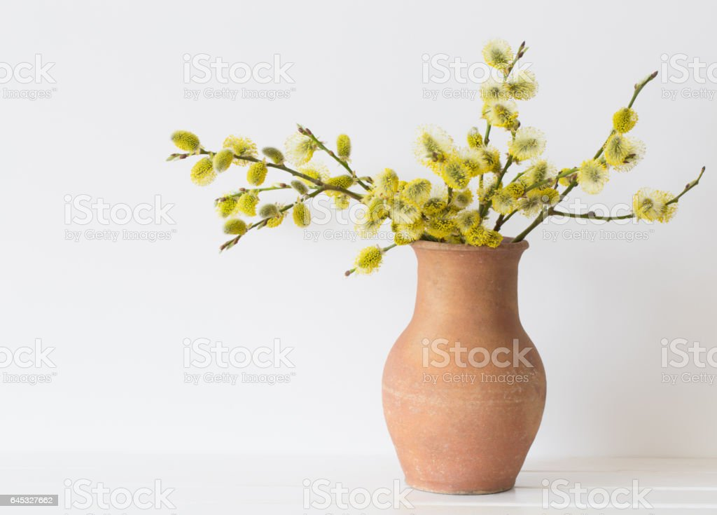 Branches Of The Pussy Willow With Flowering Bud In Vase With Water