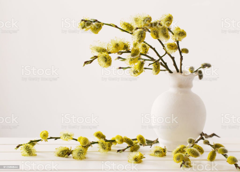 Branches of the pussy willow with flowering bud in vase with water on white background stock photo