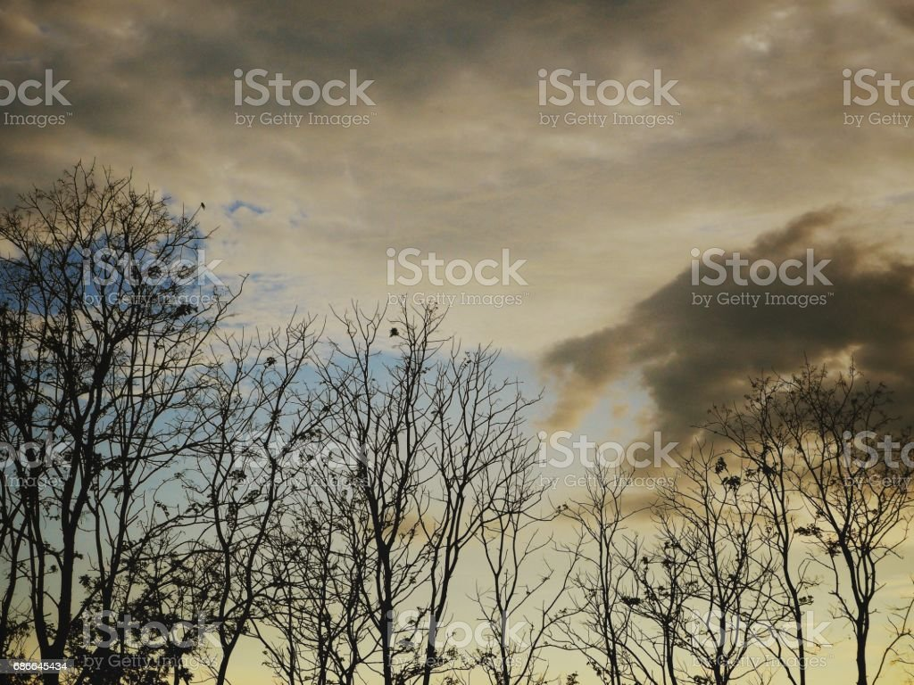 Branches of tree royalty-free stock photo