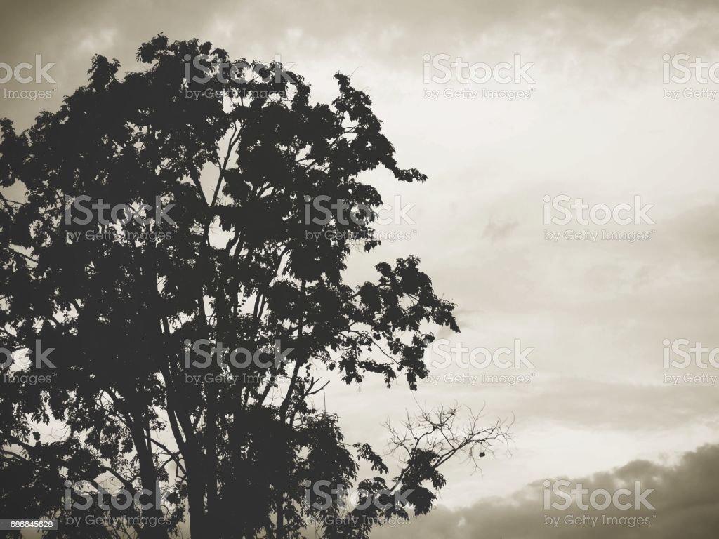 Branches of tree Lizenzfreies stock-foto