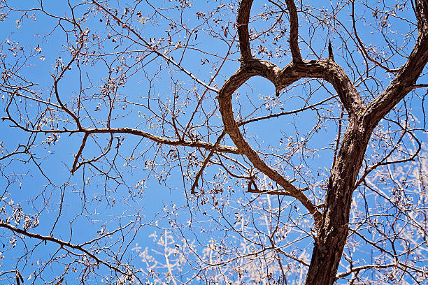 Branches of tree with heart-shaped stock photo
