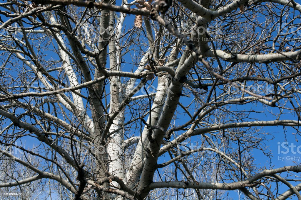 Branches of trees with the sky 2 royalty-free stock photo