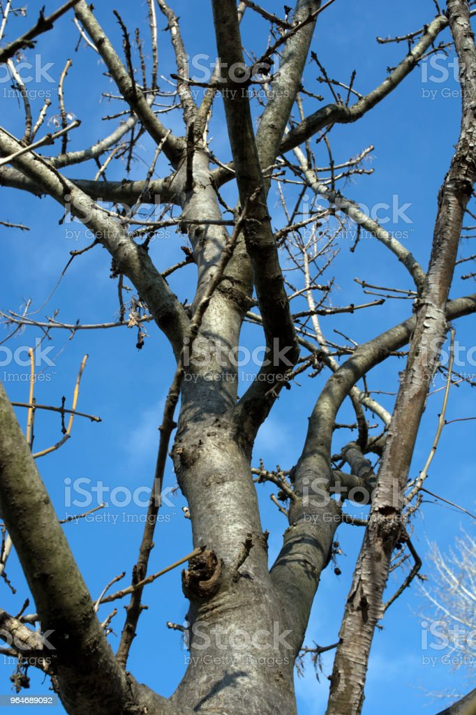 Branches of trees with the sky 3 royalty-free stock photo