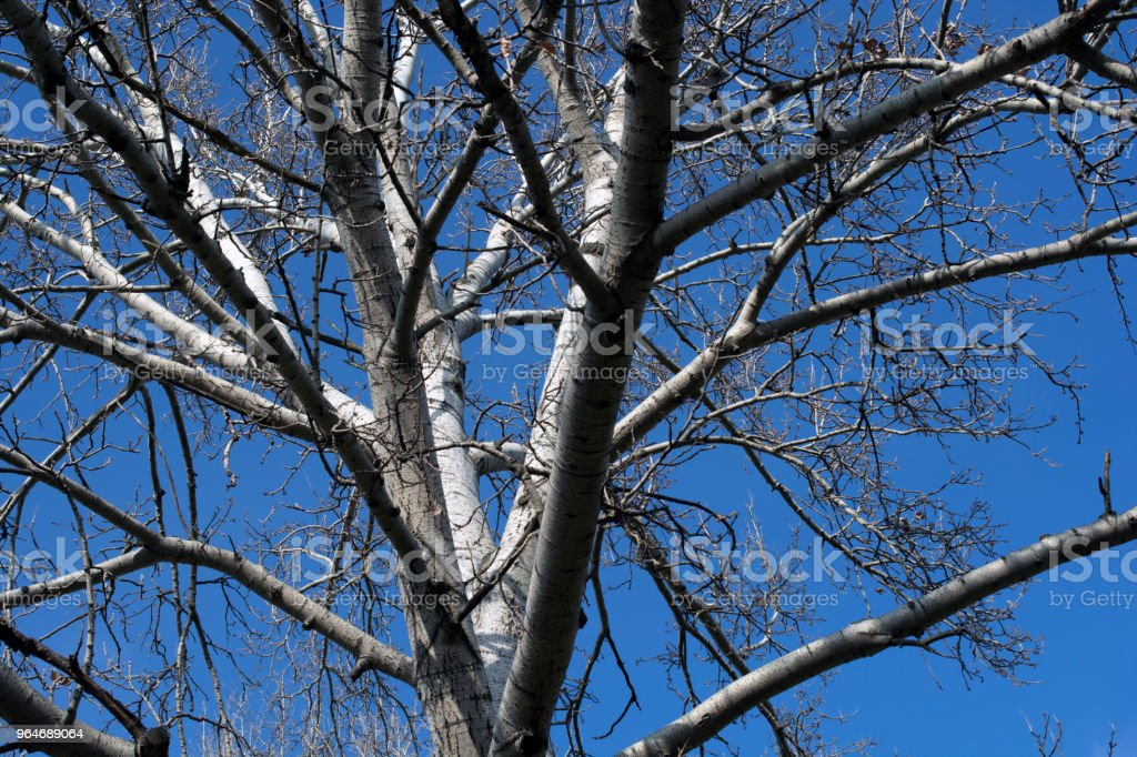 Branches of trees with the sky royalty-free stock photo