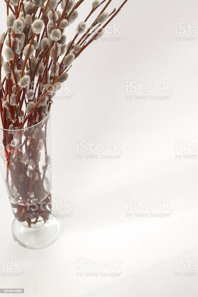 Branches Of Willoweared Flowers In A Vase On A White Background