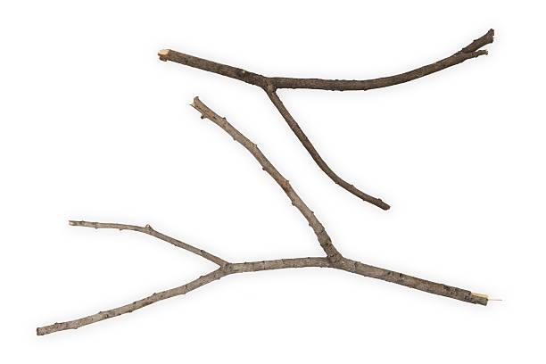les branches bâtons - branche partie photos et images de collection