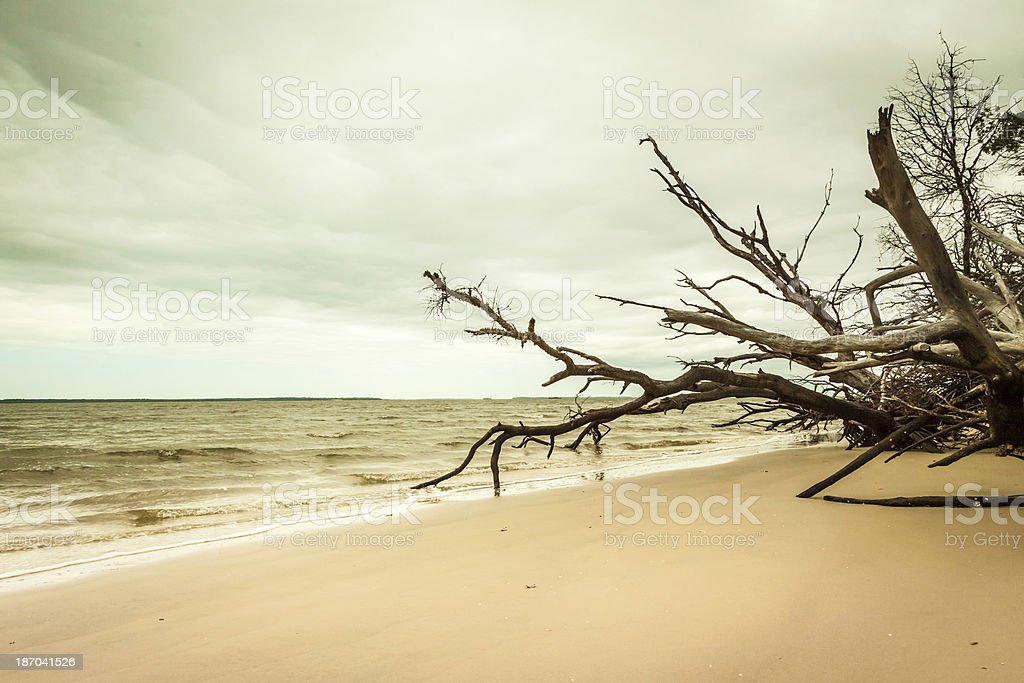 Branches to the Sea royalty-free stock photo