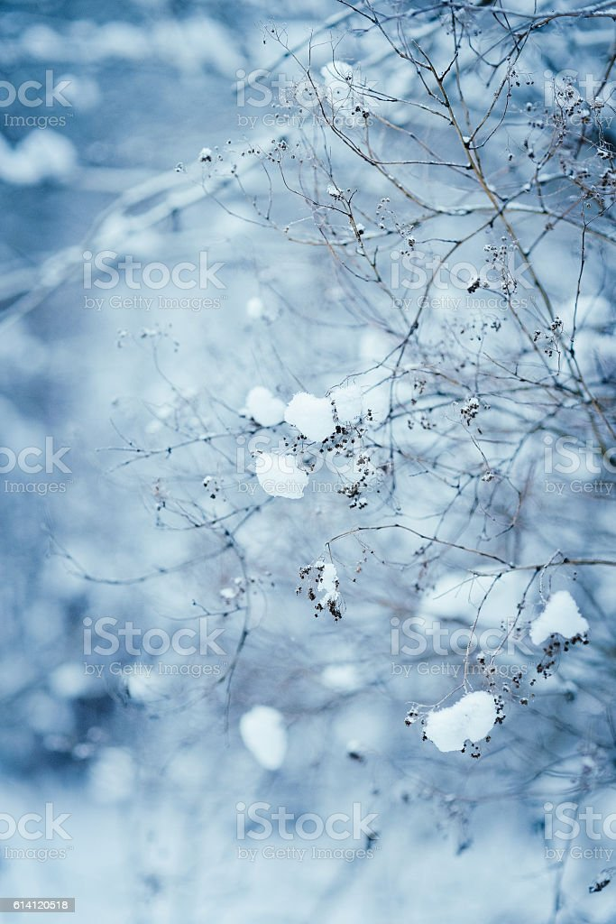 branches under the snow stock photo