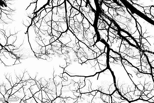 Free branching tree stock photos and royalty free images