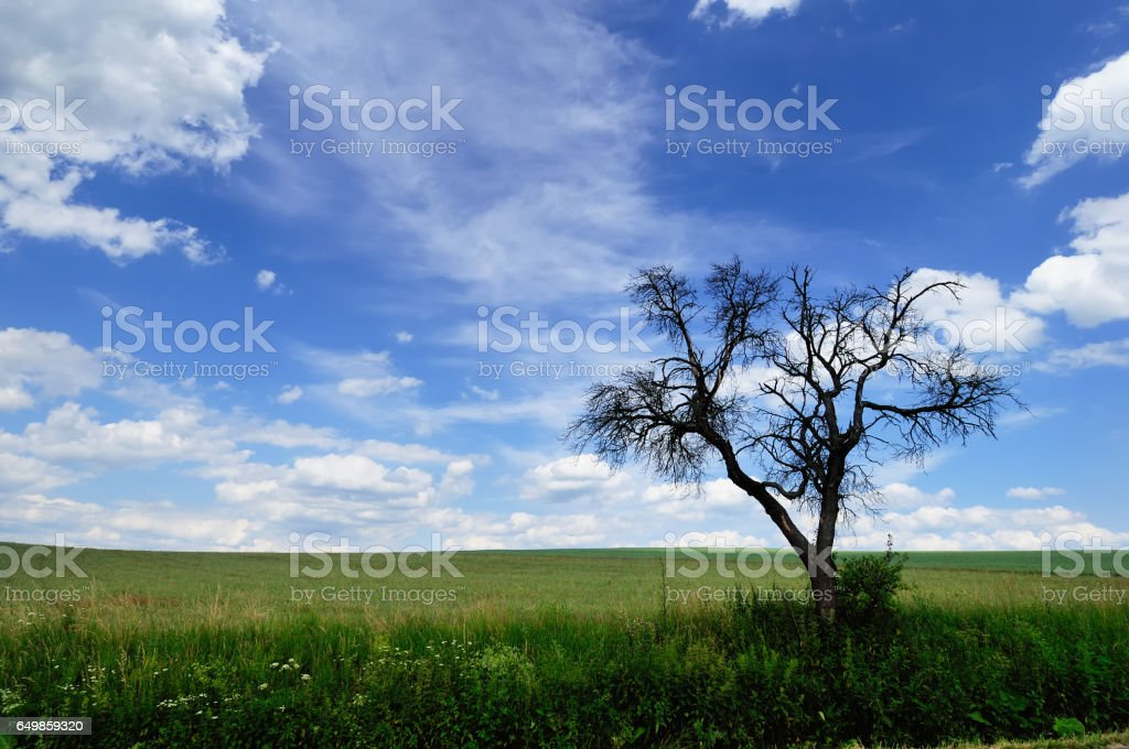 Branchy dead tree against a picturesque cloudy sky stock photo