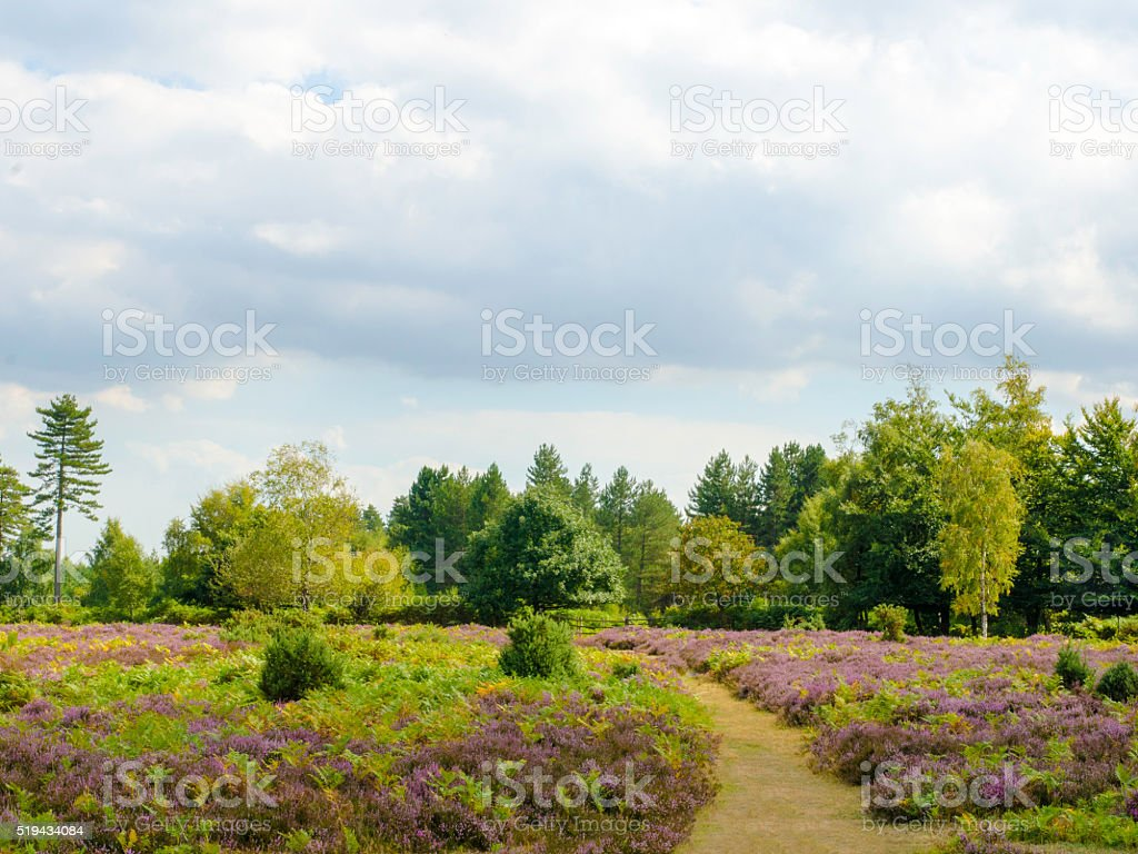 Bratley Heather stock photo