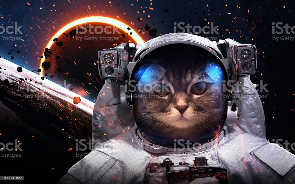 Brave cat astronaut at the spacewalk. This image elements furnished stock photo