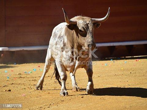 istock bravery bull 1138277776