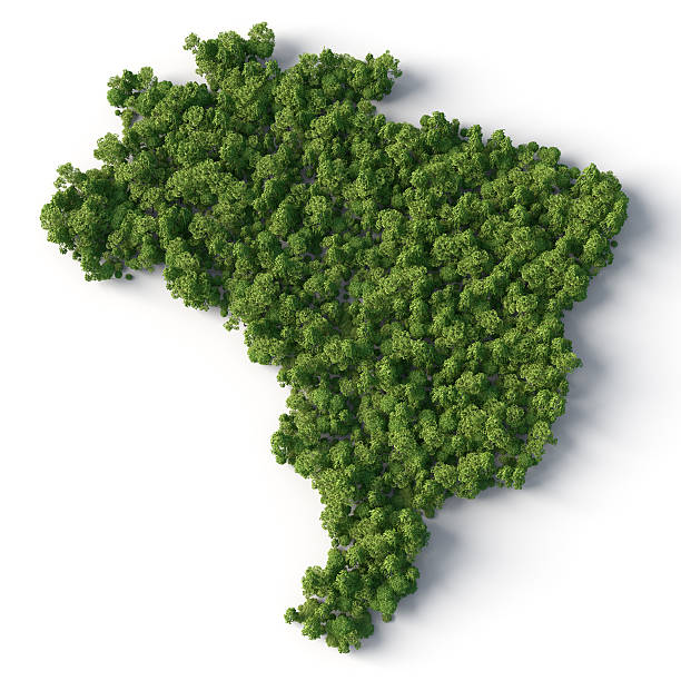 brazil map with forest stock photo