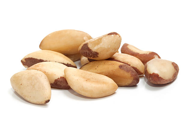 Brazil nut (Bertholletia excelsa) stock photo